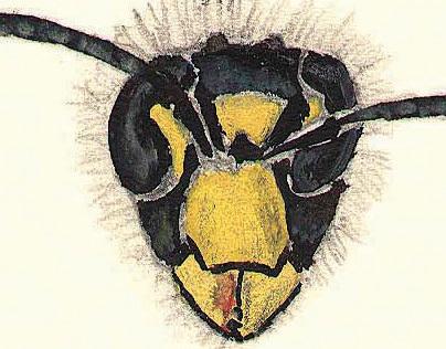 Wasps (Hymenoptera Apocrita)