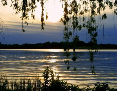 Willows & Sunsets