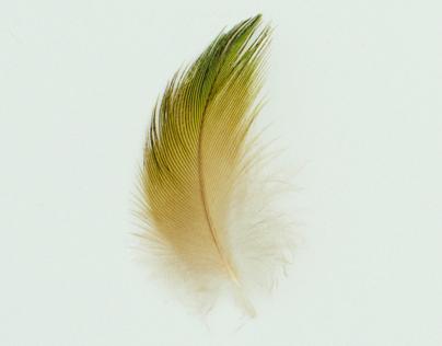 Studies of Australian feathers