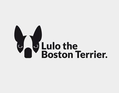 Lulo the Boston Terrier