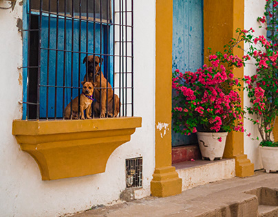 Mompóx III - Perros Enrejados y Cementerios