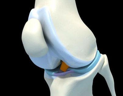 stifle joint segment