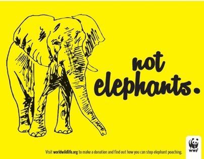 Poach Eggs, Not Elephants