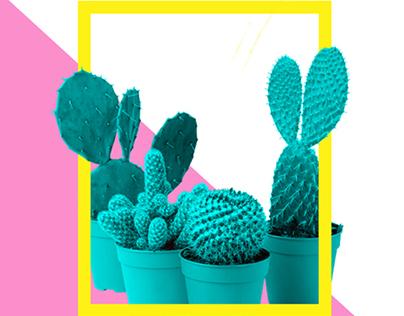 Feira Flora