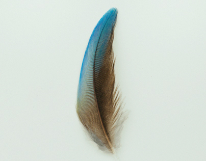 Australian feather studies 2