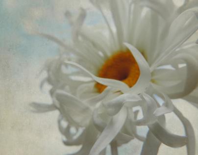 Daisy Portraits