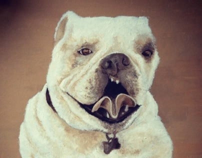 Dog with a Cleft Palate