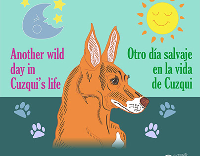 Children's book - Cuzqui