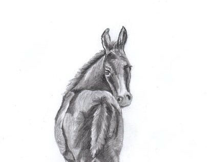 My Sketches - Just for Fun