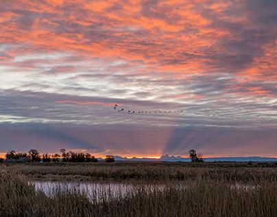 Sunrise at Camas Wildlife Refuge - Idaho
