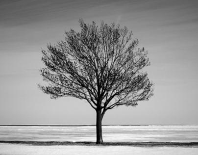 Tree, Foster Beach, Chicago