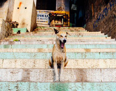 The Dogs of India