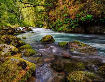 Big Quilcene River, Washington, 2013