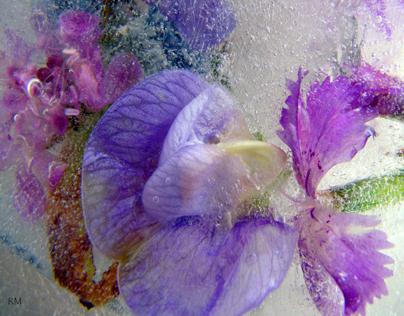 Fiori di ghiaccio
