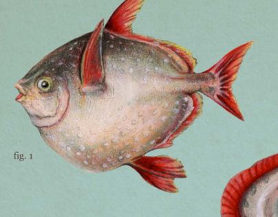 Lampriforms: Moonfish, Oarfish, Crestfish