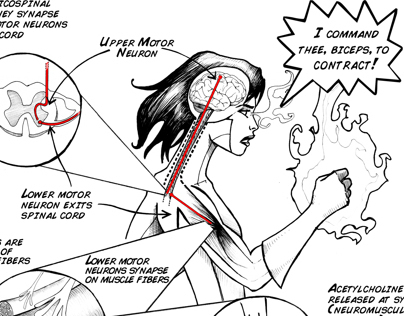 EMG SpikerBox Experiment Illustrations