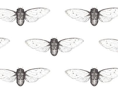 Cicadas Forever