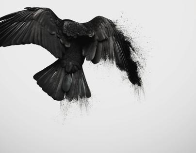 FUGL / Birds
