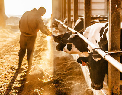 Agriculture Dairy Farming