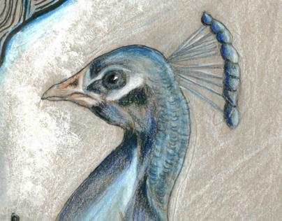 Peacock (Sketch book)