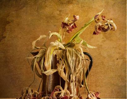 Flowers in Repose