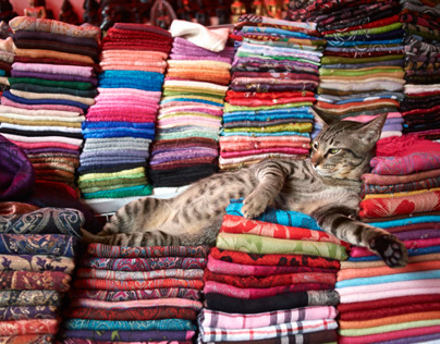 Thailand :: Dogs & Cats