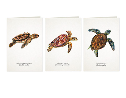 Vulnerable: The Sea Turtles