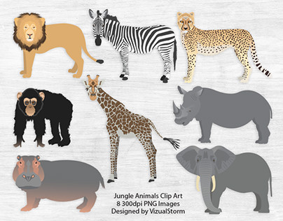 Jungle Animal Illustration Set
