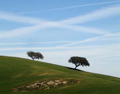 THREE of TREES (2012)