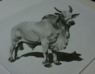 Bull 3D (anamorphosis)