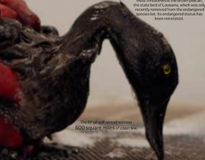 BP Oil Spill Collection 2014