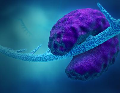 mRNA Visualization