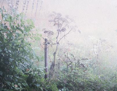 Waldrand, Herbst