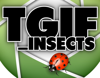 @tgif_insects Instagram Hub
