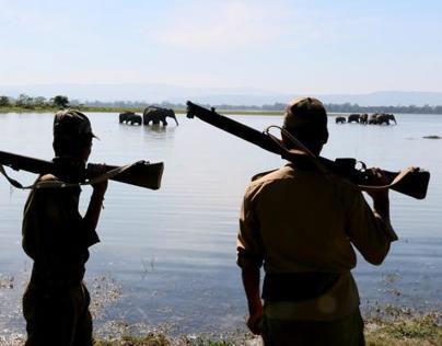 ELEPHANT TRAILS NORTH EAST INDIA