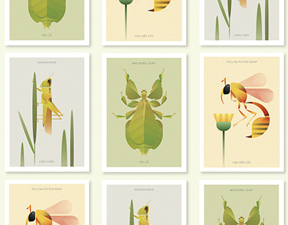 THE INSECT WORLD COLLECTION
