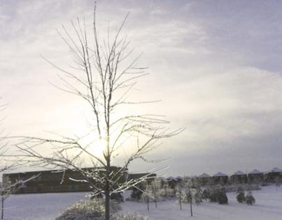 Whimsical Winter (ii)  - Photography