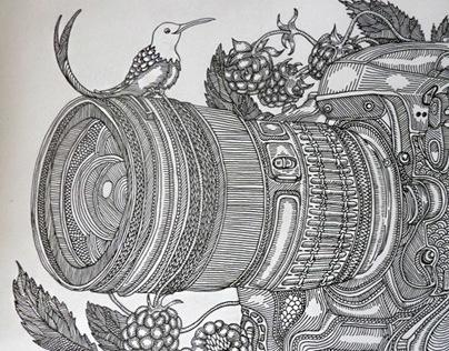 Bird and camera