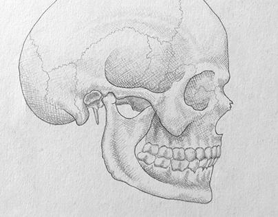 Pencil Drawing skull