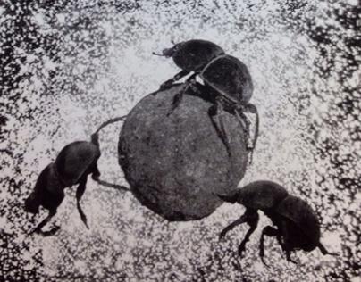 Scarabaeoidea