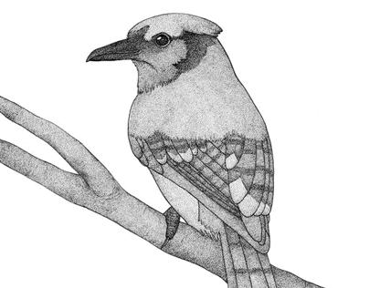 A bird named Hans