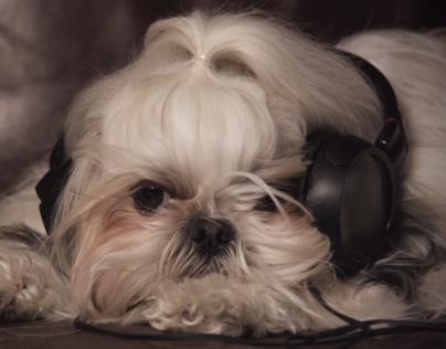 """IAMS """"Doggie Jam"""""""