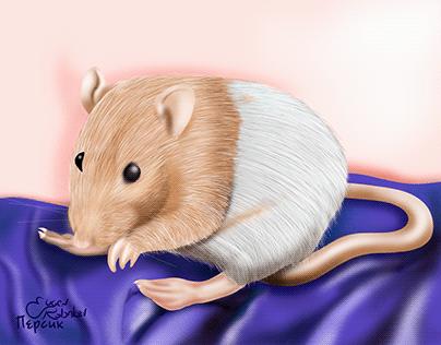 My pet, rat Peach