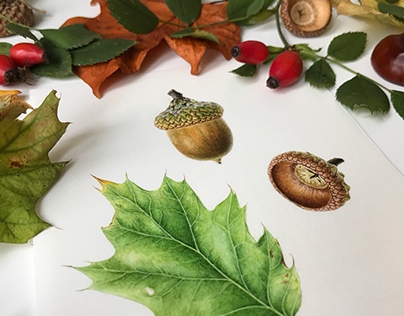 Acorns On Vellum