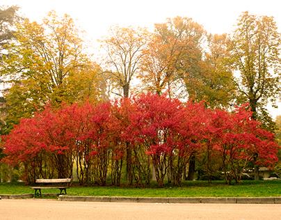 Autumn City Park in Bologna, Italy