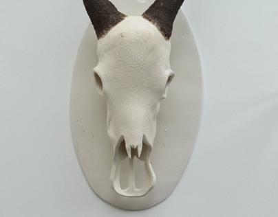 Ceramic Animal Skull