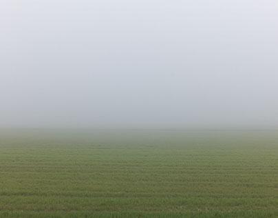 Terre padane