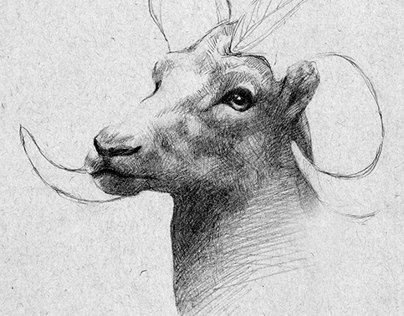 Sketches from the Natural History Museum