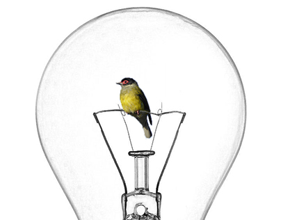 Encasing ideas