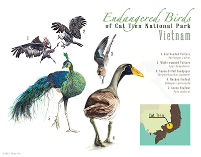 Endangered Birds found in Cat Tien National Park